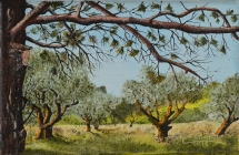 244-oliviers-dans-les-alpilles