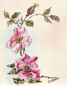 87-fleurs-eglantine-original